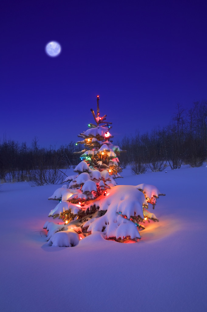 Glowing Christmas Tree in Snow | Marie Lamba, author