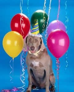 Dog with Birthday Hat and Balloons