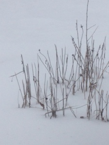 Snow March 1 2015
